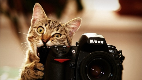 cat-nikon-camera-photographer-nikon-d700-lens-animals
